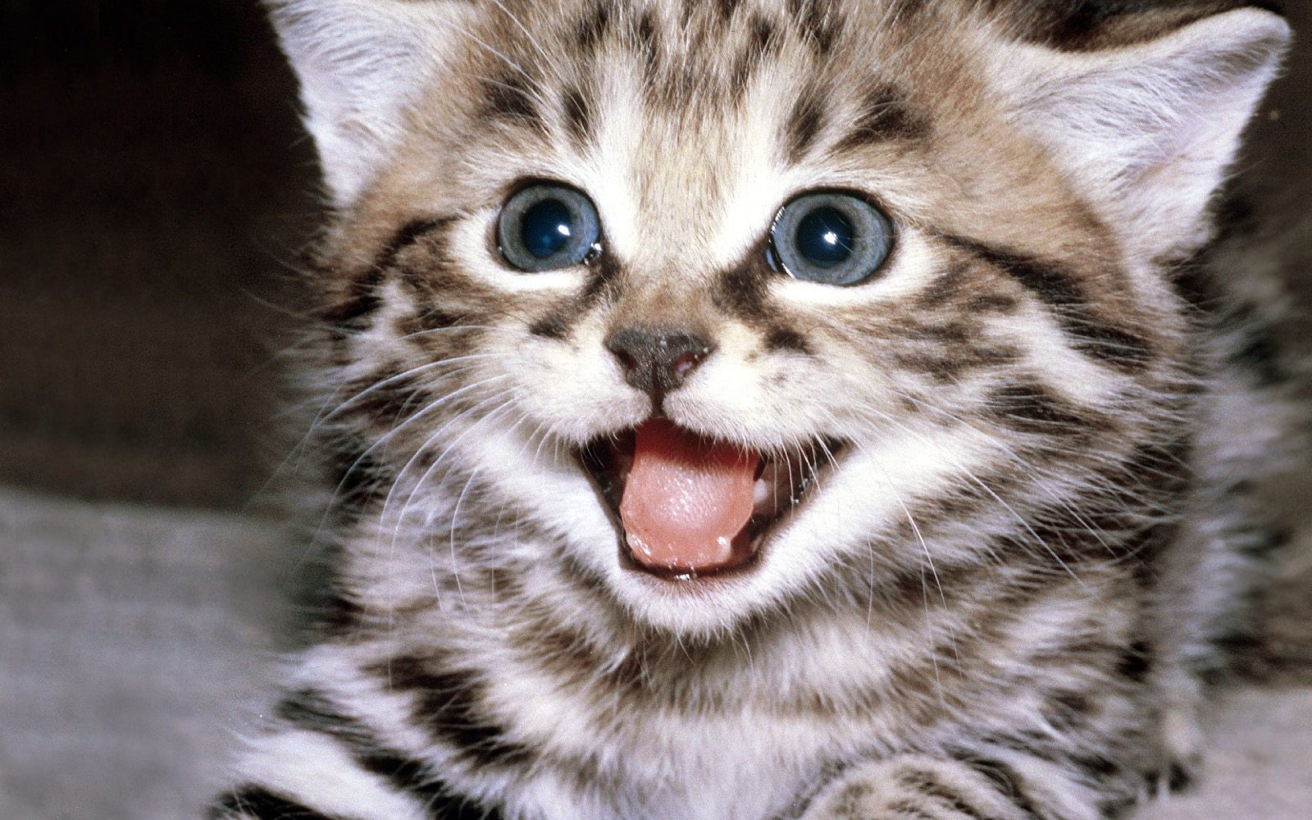 cute-cat-wallpaper-2560x1600