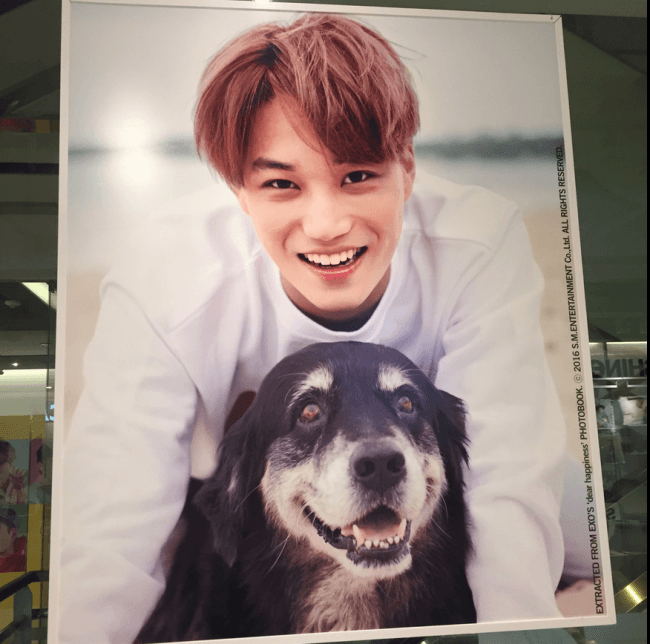 EXO's Kai smiling brightly with a dog / SM Entertainment