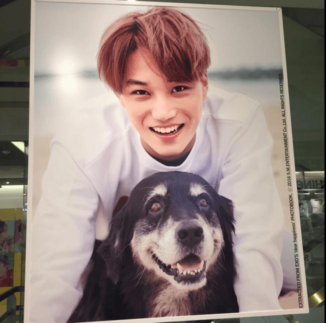 EXO's Kai smiling brightly with a dog / SM Entertainment