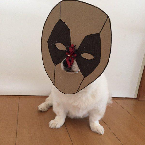 chihuahua-mametaro-deadpool