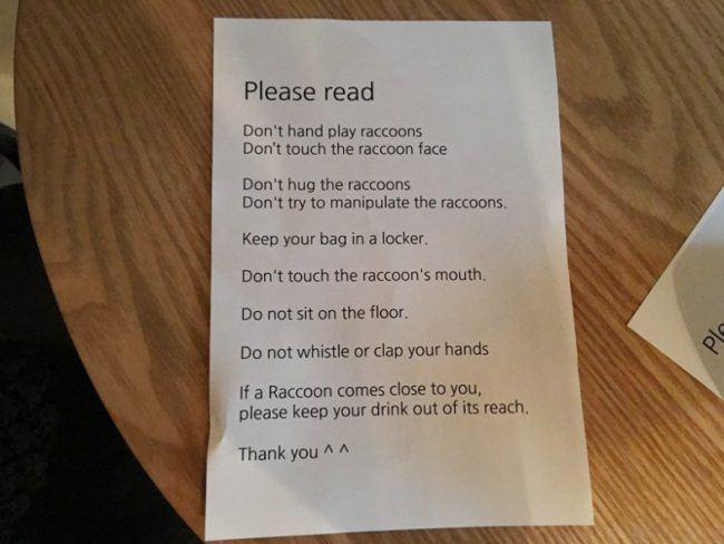raccoon-rules