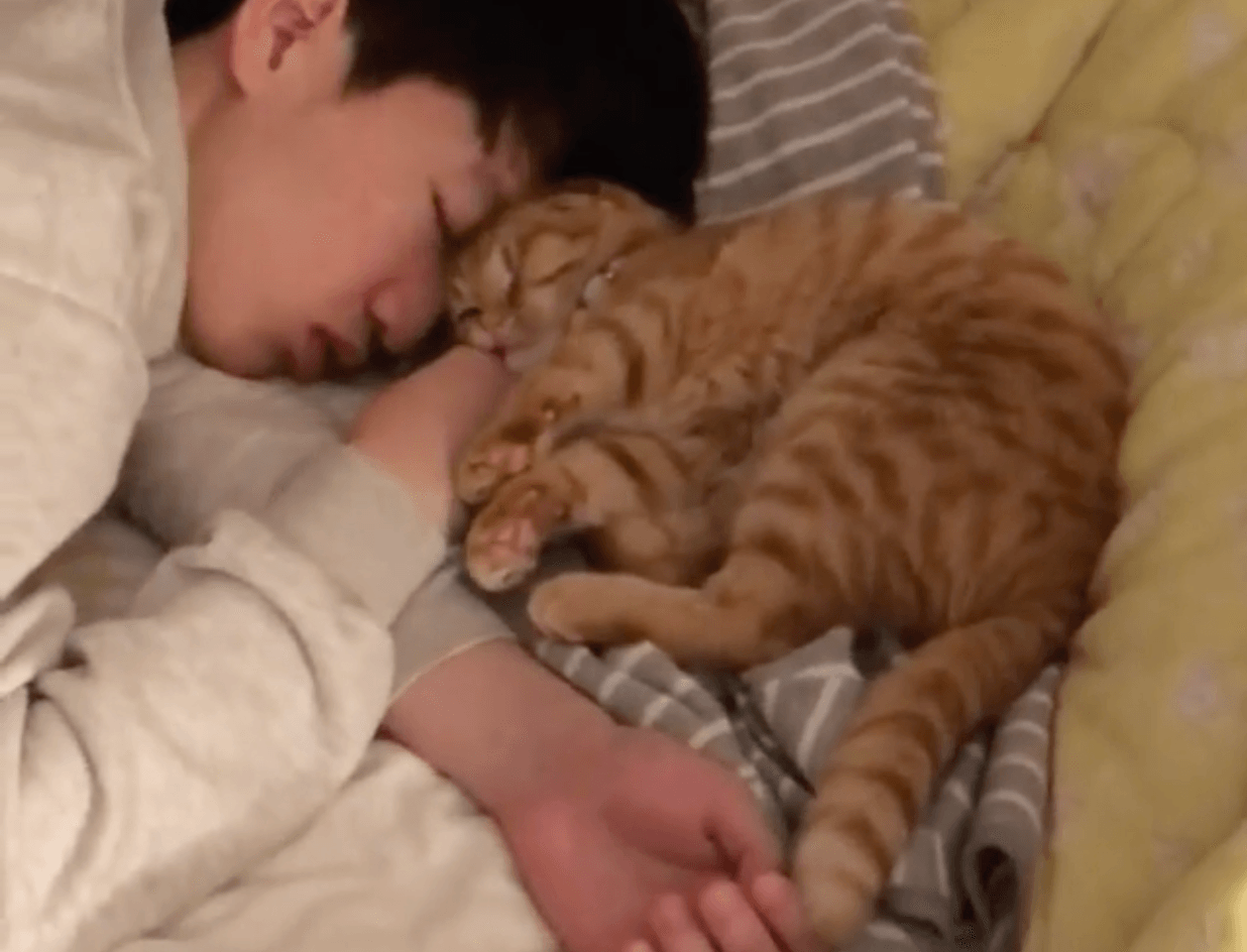 This Cat Loves Its Owner So Much It Fell Asleep On His Face