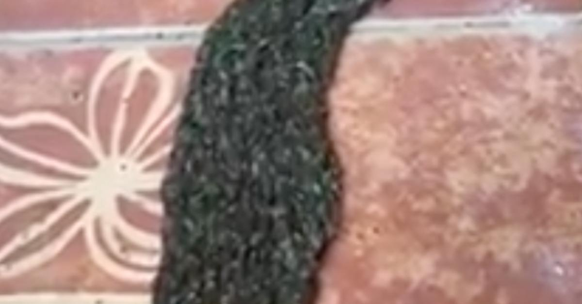 This looks like a wig, but zooming in reveals something horrifying