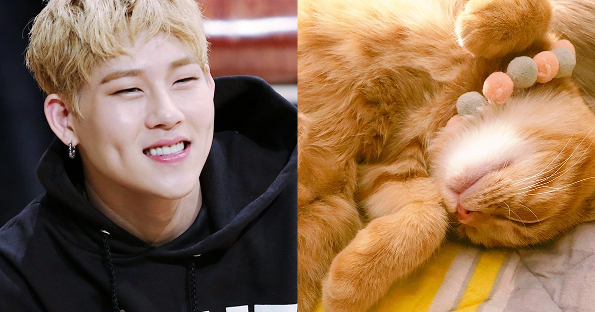 If MONSTA X Were Famous Internet Cats This Is Who They'd Be