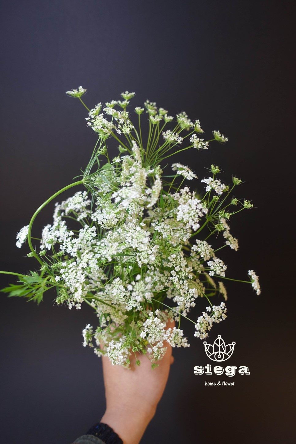 The secret behind the bouquet of flowers in jungkooks new teaser but queen annes lace is called amicho in korean izmirmasajfo