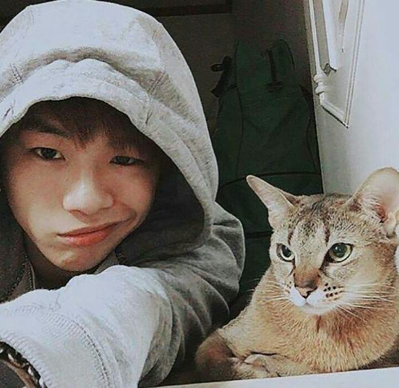 15 photos of idol cats to celebrate international cat day